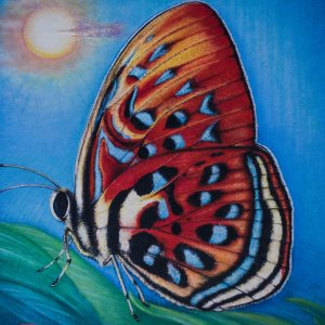 Farfalla di Sumatra