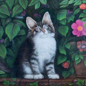 Gattino Curioso